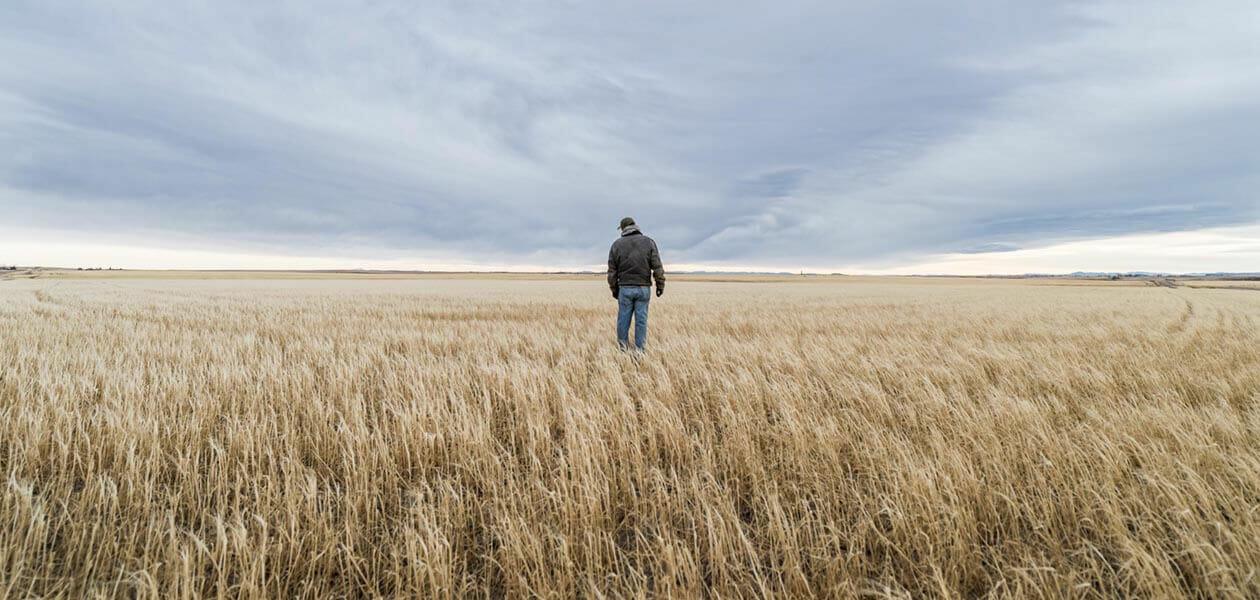 Sustainability in farming barley